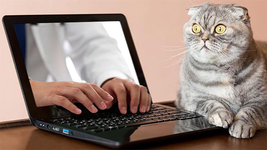 Kat opgeschrikt door handen uit laptopscherm